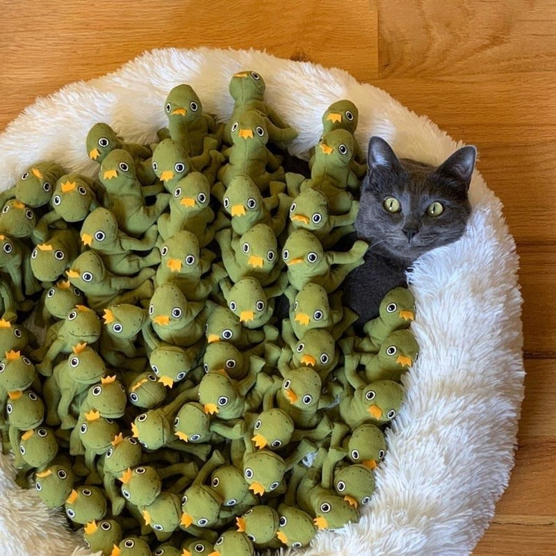 funny cat pic a grey cat with yellow eyes looking alarmed while sitting in a white fluffy cat bed drowning in green frog prince plushies toys in crowns