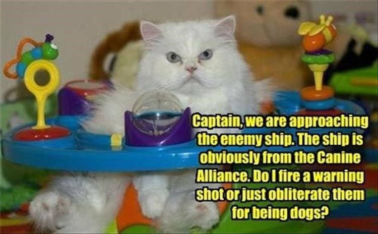 Cat - Captain, we are approaching the enemy ship. The ship is obviously from the Canine Alliance. Do I fire a warning shot or just obliterate them for being dogs?