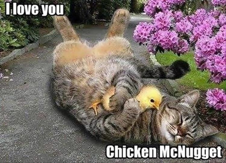 Photo caption - I love you Chicken McNugget
