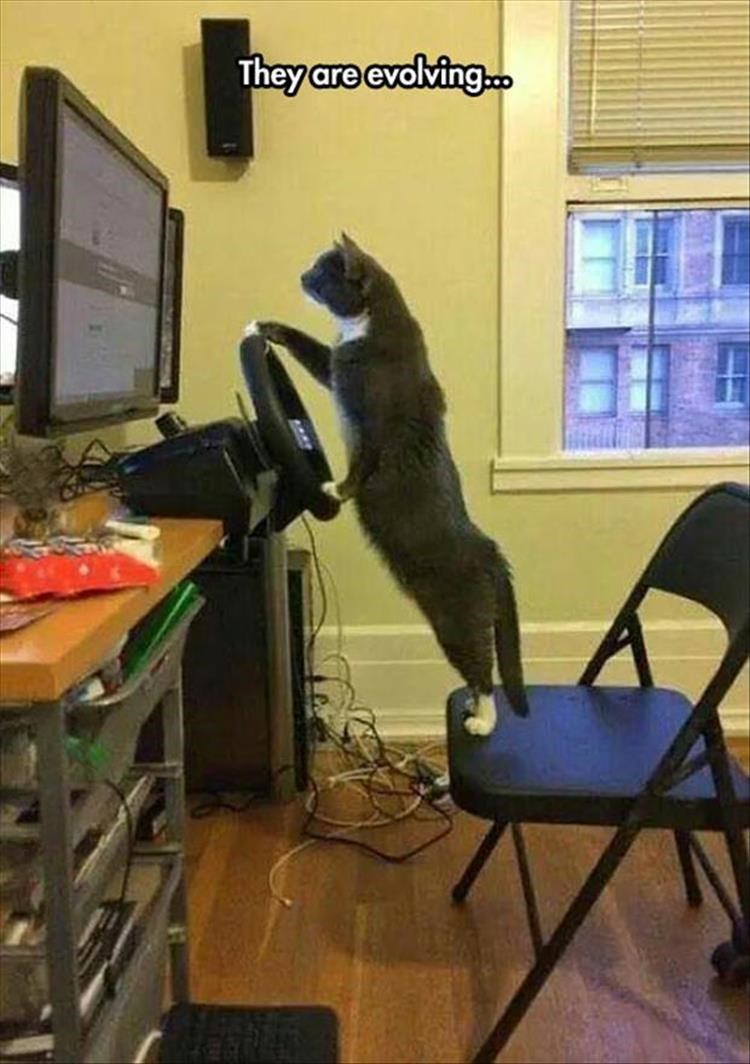Cat - They are evolving.