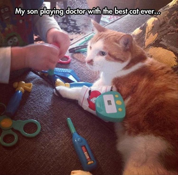 Cat - My son playing doctor with the best cat ever. CO 85 9A0