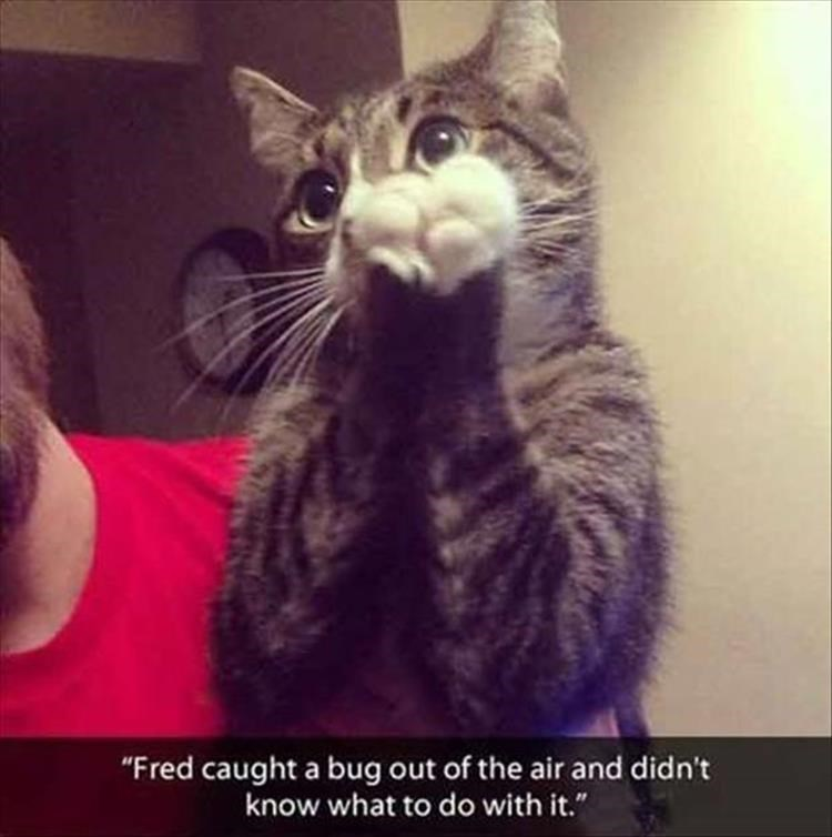 """Cat - """"Fred caught a bug out of the air and didn't know what to do with it."""""""