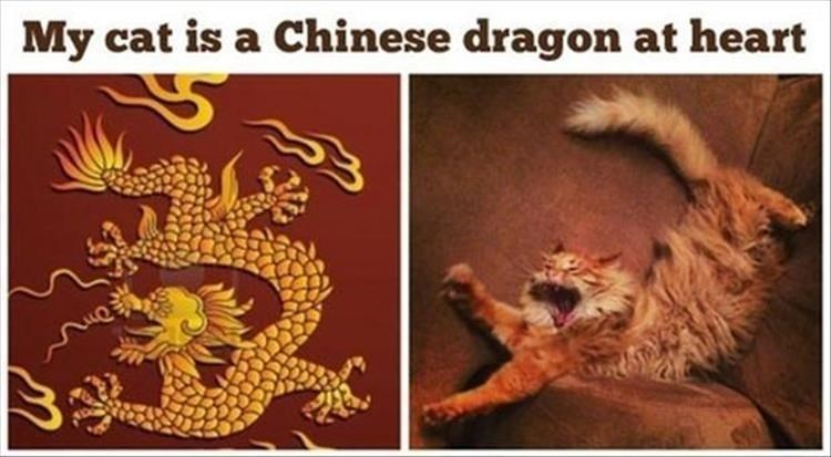 Felidae - My cat is a Chinese dragon at heart