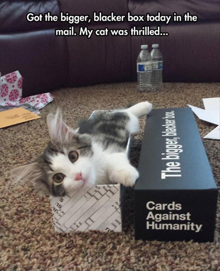 Cat - Got the bigger, blacker box today in the mail. My cat was thrilled... Cards Against Humanity an. ns,t The bige hade e