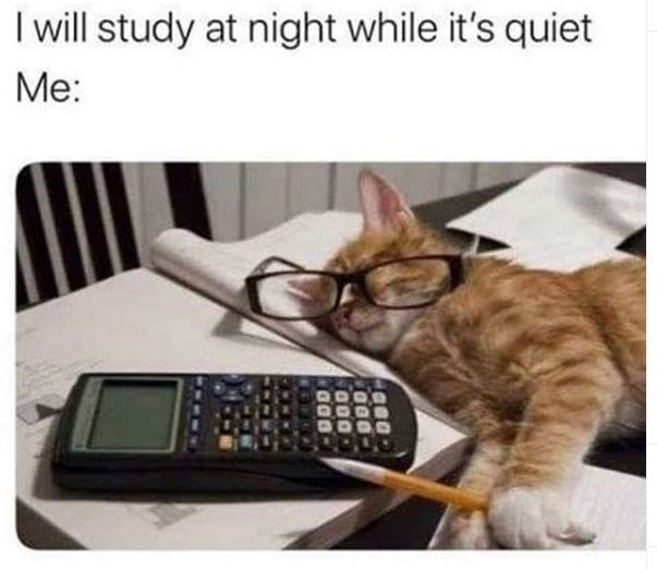 Cat - I will study at night while it's quiet Me: