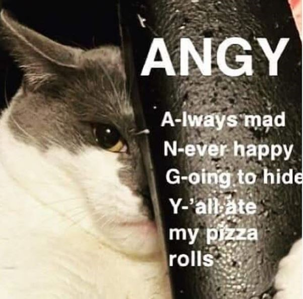 Cat - ANGY A-lways mad N-ever happy G-oing to hide Y-'all ate my pizza rolls