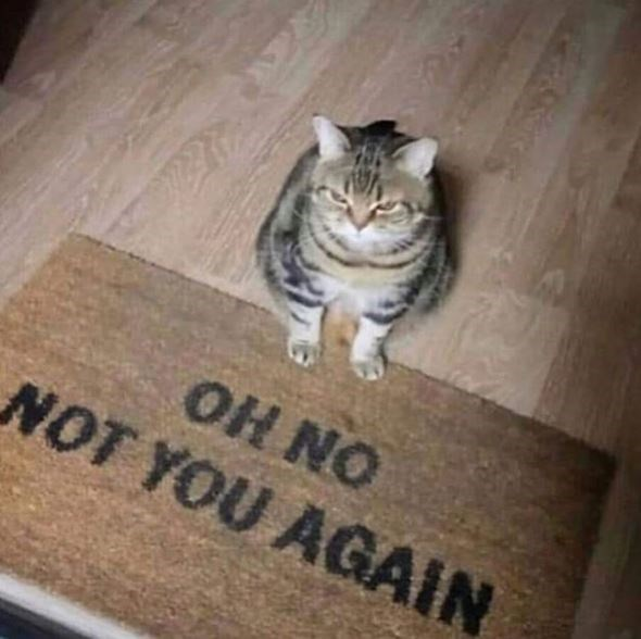 Cat - OH NO NOT YOU AGAIN