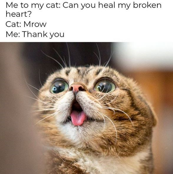 Cat - Me to my cat: Can you heal my broken heart? Cat: Mrow Me: Thank you