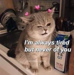 Cat - I'm always tired but never of you 우유 GT whol to