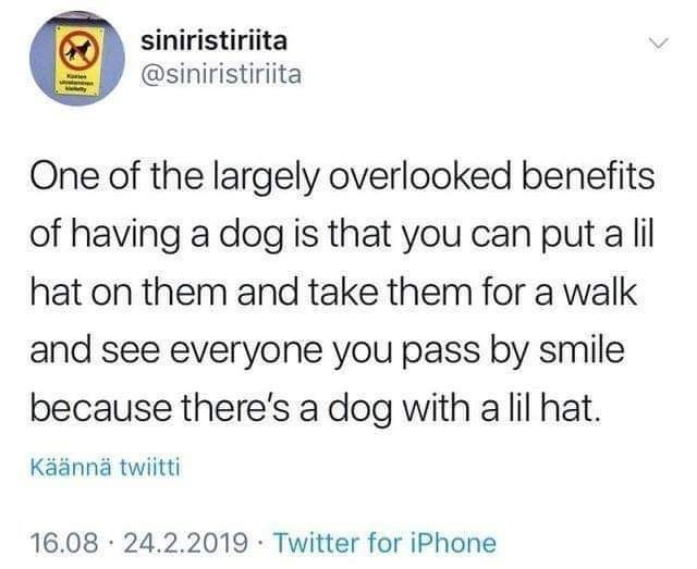 Text - siniristiriita @siniristiriita One of the largely overlooked benefits of having a dog is that you can put a lil hat on them and take them for a walk and see everyone you pass by smile because there's a dog with a lil hat. Käännä twiitti 16.08 · 24.2.2019 · Twitter for iPhone