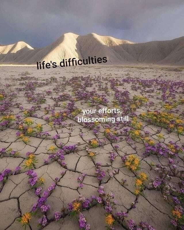 Purple - life's difficulties your efforts, blossoming still
