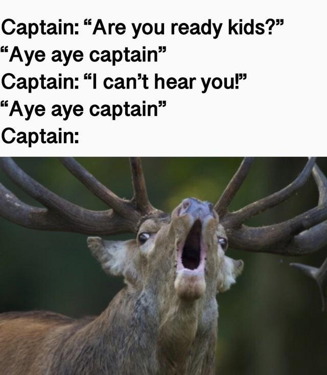 "Wildlife - Captain: ""Are you ready kids?"" ""Aye aye captain"" Captain: ""I can't hear you!"" ""Aye aye captain"" Captain:"
