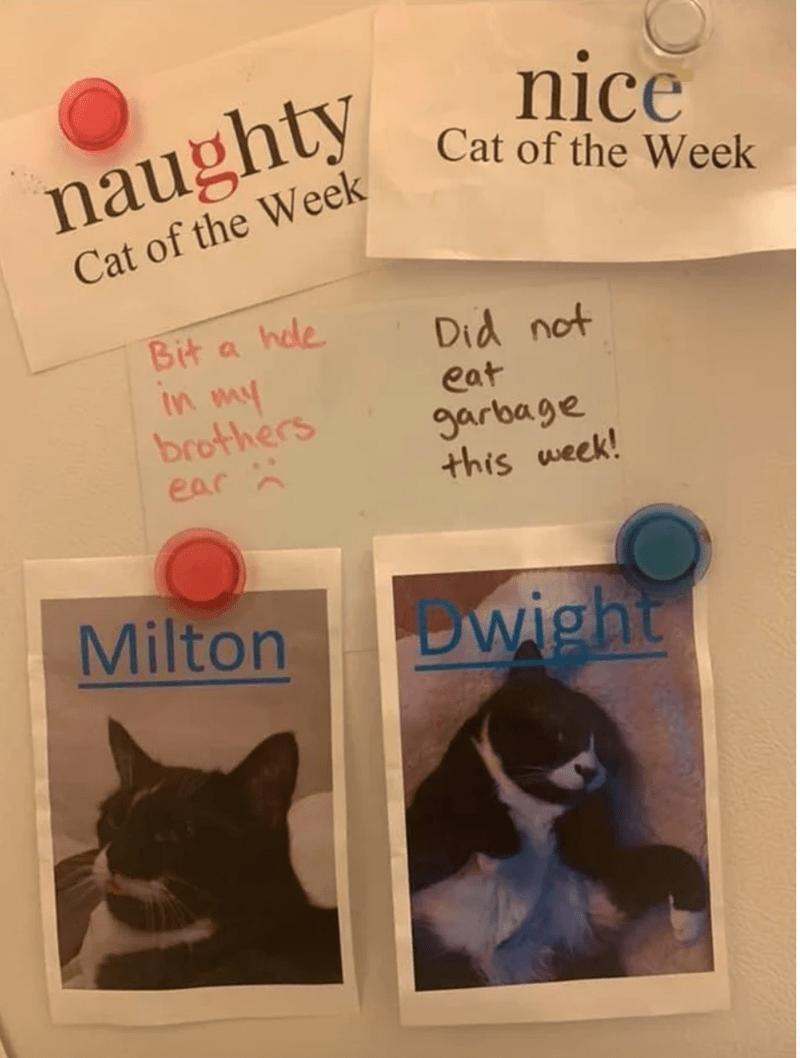 Cat - nice naughty Cat of the Week Cat of the Week Bit a hdle Did not In my brothers eat garbage this week! ear Milton Dwight