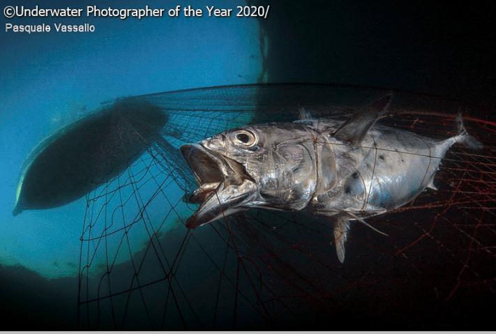 Fish - Underwater Photographer of the Year 2020 Pasquale Vassallo