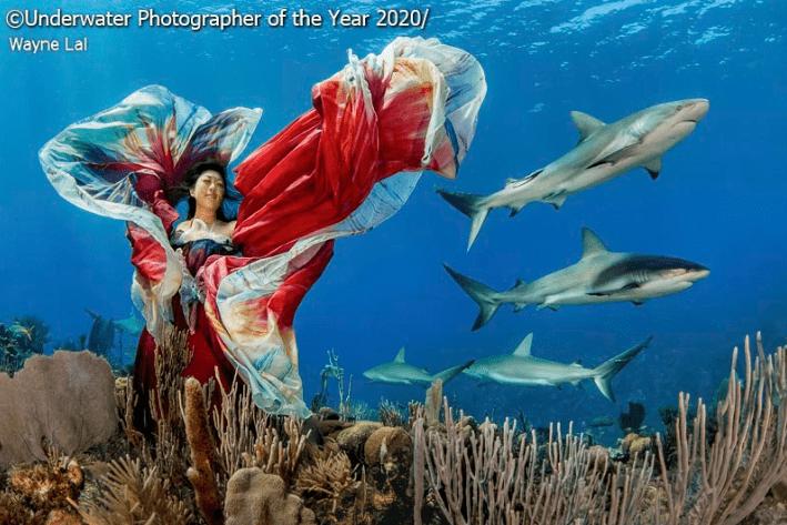 Underwater - Underwater Photographer of the Year 2020 Wayne Lal