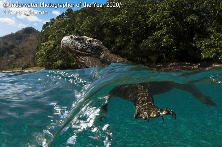 Natural landscape - Underwater Photographer of the Year 2020 3 Gregory Sherman