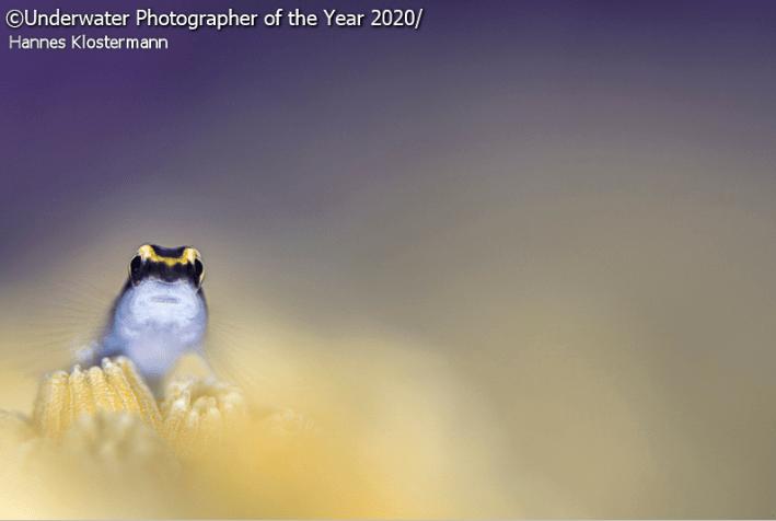 Bird - Underwater Photographer of the Year 2020 Hannes Klostermann