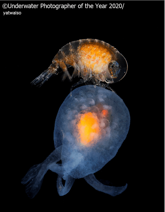 Organism - Underwater Photographer of the Year 2020 yatwalso