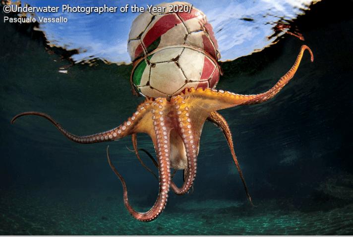 Octopus - Underwater Photographer of the Year 2020 Pasquale Vassallo