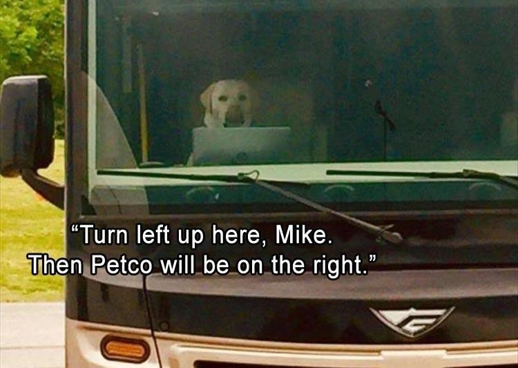 dog meme   turn left up here mike then petco will be on the right   pic of a dog sitting in the passenger seat of a truck car with an open laptop