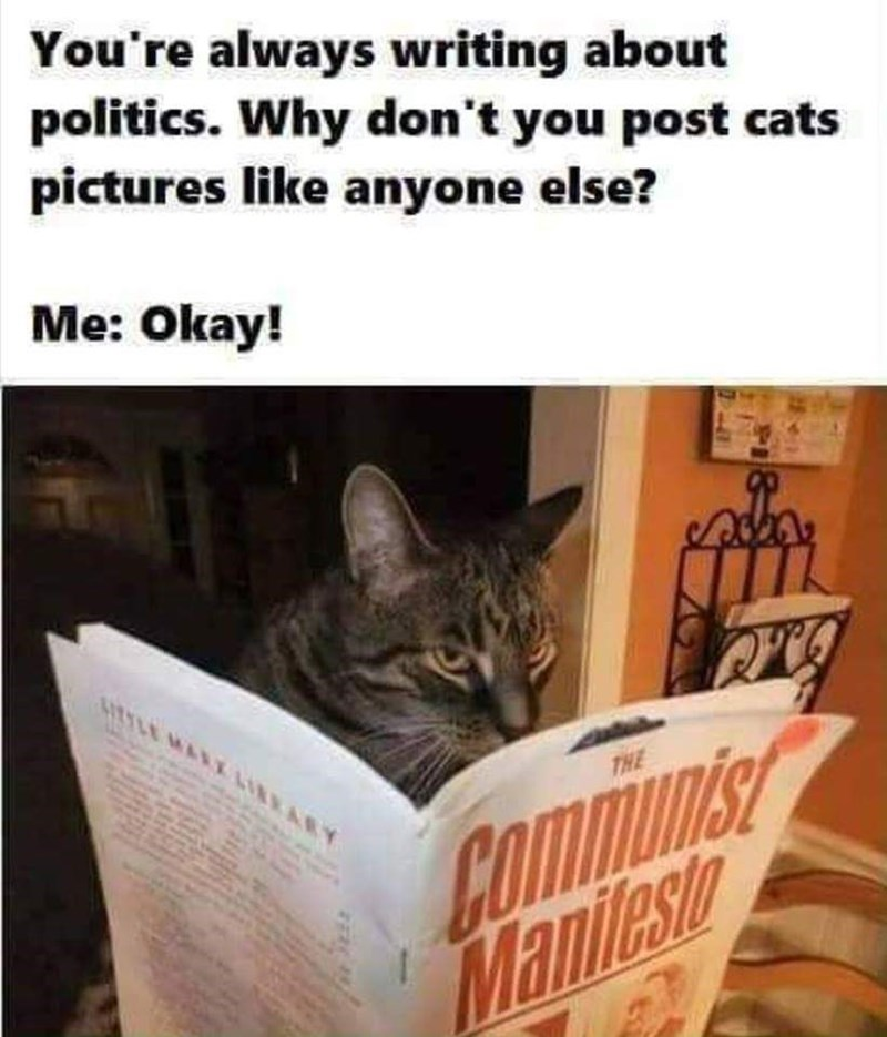 Cat - You're always writing about politics. Why don't you post cats pictures like anyone else? Me: Okay! TLE MART LIRRARY Communis Manilesto THE