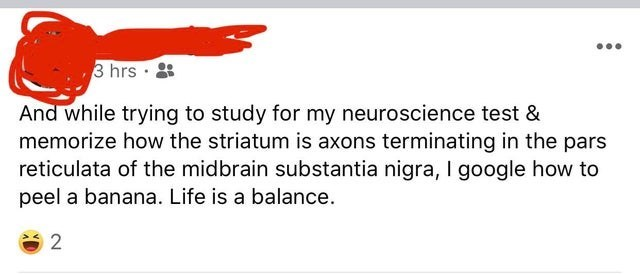 Text - 3 hrs And while trying to study for my neuroscience test & memorize how the striatum is axons terminating in the pars reticulata of the midbrain substantia nigra, I google how to peel a banana. Life is a balance.
