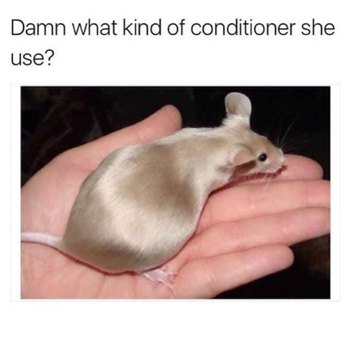 Mouse - Damn what kind of conditioner she use?