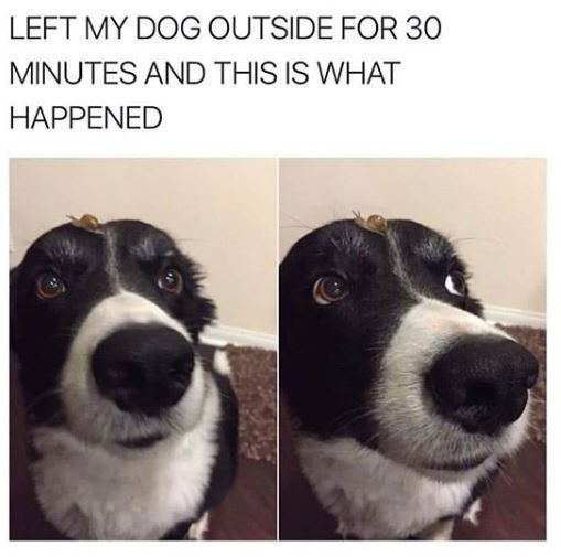 Dog - LEFT MY DOG OUTSIDE FOR 30 MINUTES AND THIS IS WHAT HAPPENED