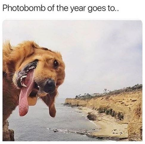 Dog - Photobomb of the year goes to..