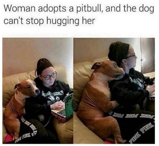 Dog - Woman adopts a pitbull, and the dog can't stop hugging her ERIT PINE PENK PINK PINK,