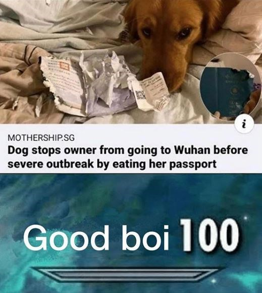 Canidae - MOTHERSHIP.SG Dog stops owner from going to Wuhan before severe outbreak by eating her passport Good boi 100