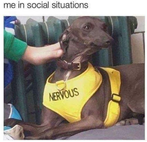 Dog - me in social situations NERVOUS