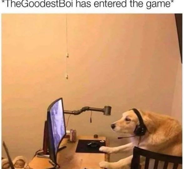 Dog - TheGoodestBoi has entered the game""