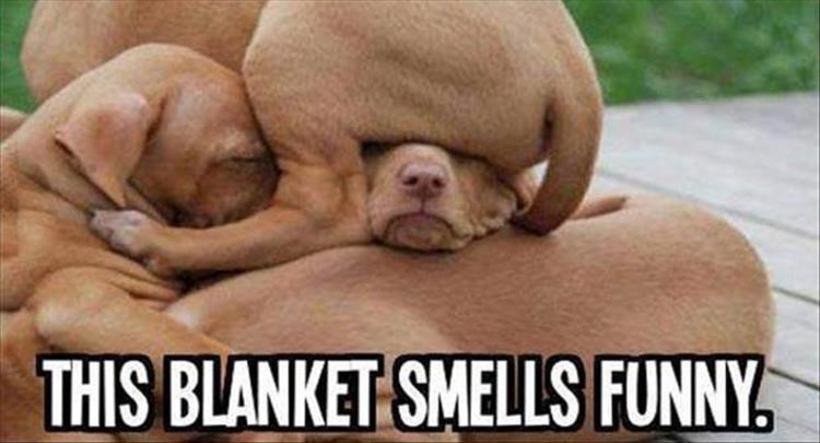 Dog breed - THIS BLANKET SMELLS FUNNY.