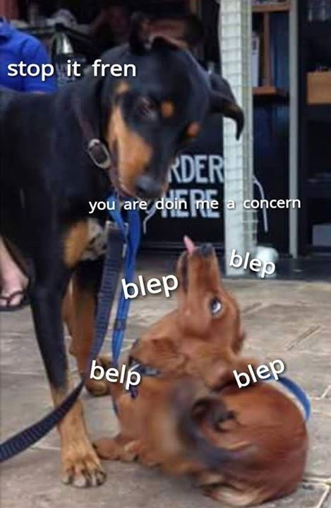 Dog - stop it fren RDER you are doin me a concern blep blep belp blep