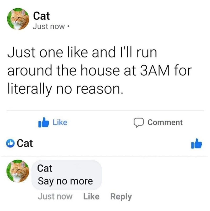 Funny Facebook post where a cat says he'll run around the house at 3am if he gets one like | just one like and i'll run around the house at 3am for literally no reason say no more cat
