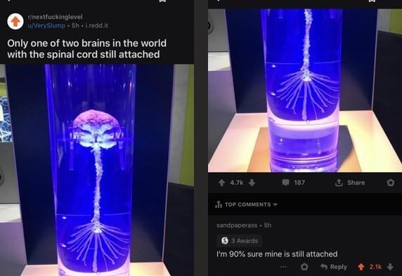 Cobalt blue - r/nextfuckinglevel uverySlump 5h - L.redd.it Only one of two brains in the world with the spinal cord still attached 14.7k 187 t Share TOP COMMENTS sandpaperass . 5h 9 3 Awards I'm 90% sure mine is still attached * Reply 2.1k