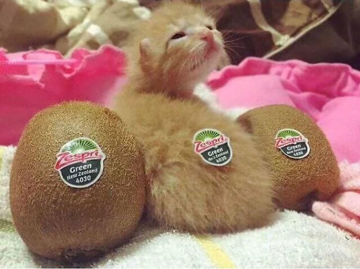Cat - spri Green Rew Zealand 4030 Tespri Green teatane 4030 Green