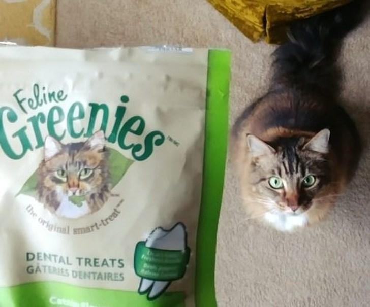 Cat - Creenier Feline the original smart-treat DENTAL TREATS GATERIES DENTAIRES Catin