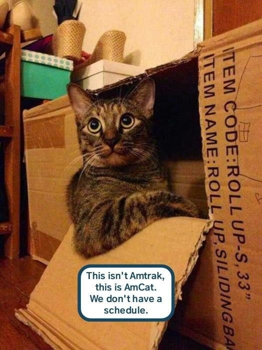 "Cat - This isn't Amtrak, this is AmCat. We don't have a schedule. ITEM CODE:ROLLUP-S, 33"" TEM NAME:ROLL UP, SILIDINGBA"