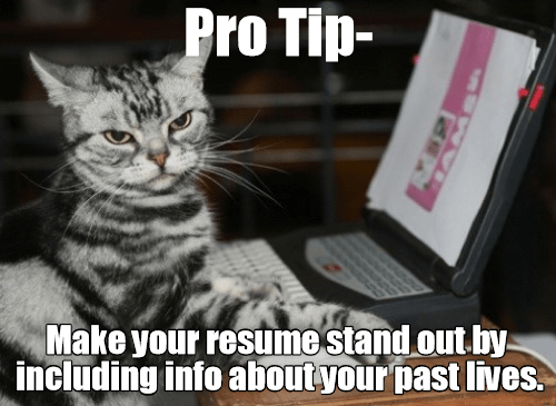 Cat - Pro Tip- Make your resume stand out by. including info about your past lives.