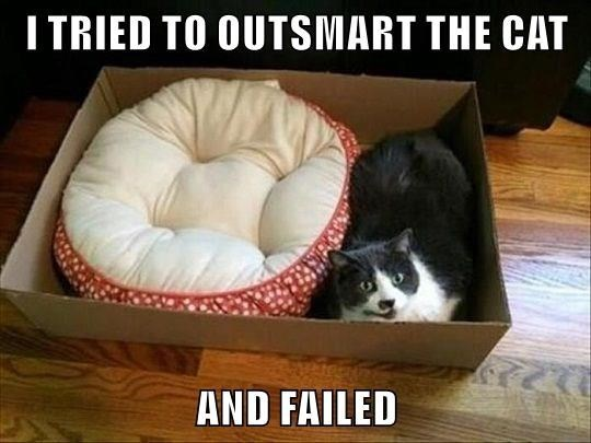 Cat - I TRIED TO OUTSMART THE CAT AND FAILED