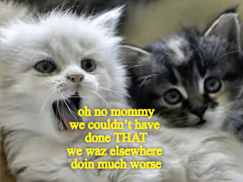 Cat - oh no mommy we couldn't have done THAT we waz elsewhere doin much worse