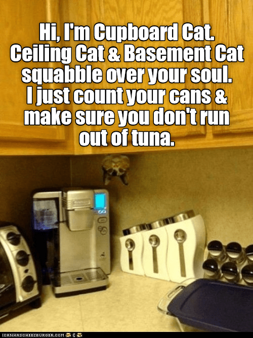 Room - Hi, I'm Cupboard Cat. Ceiling Cat & Basement Cat squabble over your soul. Ijust count your cans & make sure you don't run out of tuna. ICANHASCHEEZEURGER.COM