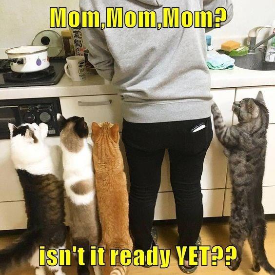 Cat - Mom. Mom,Mom?P isn't it ready VET??