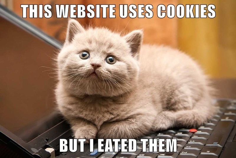 Cat - THIS WEBSITE USES COOKIES BUT L EATED THEM