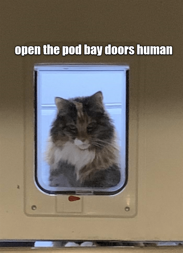 Cat - open the pod bay doors human