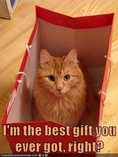 Cat - I'm the best gift you ever got, right? ICANHASCHEEZBURGER.COM E