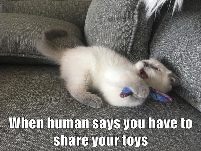 Cat - When human says you have to share your toys