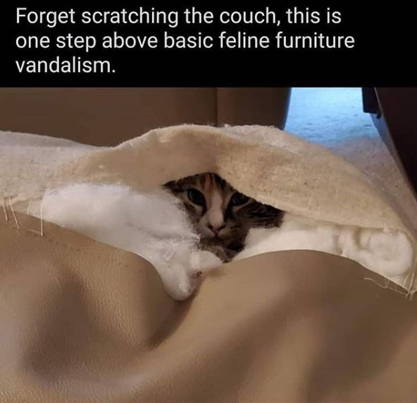 Cat - Forget scratching the couch, this is one step above basic feline furniture vandalism.